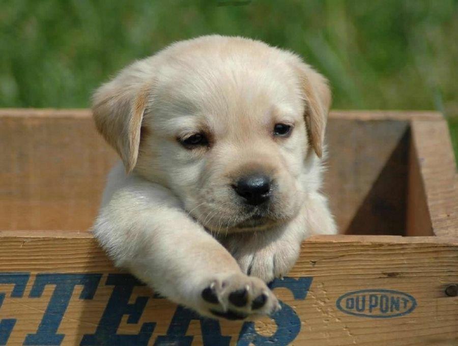 kutyabejáró, kutyaajtó kutyaházra
