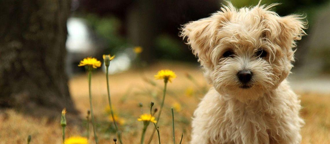 kutyaajtó értékesítése, eladása